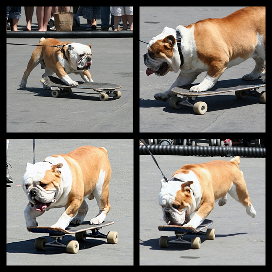 Kevin Sutton Show - Skateboarding Dog